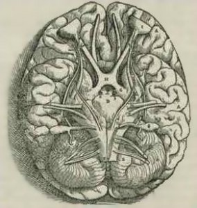 1543, Andreas Vesalius 'Fabrica, Base Of The Brain